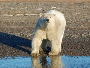 polar-bear-expedition-northern-alaska-tour-company-6