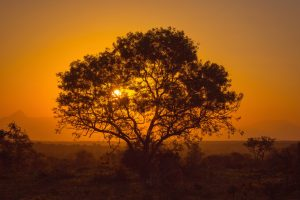 African Photo Safaris