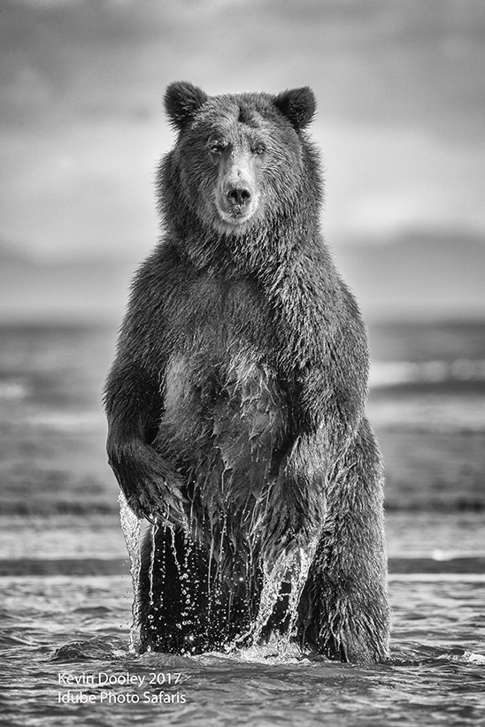 Alaska Brown Bear Bear Workshops