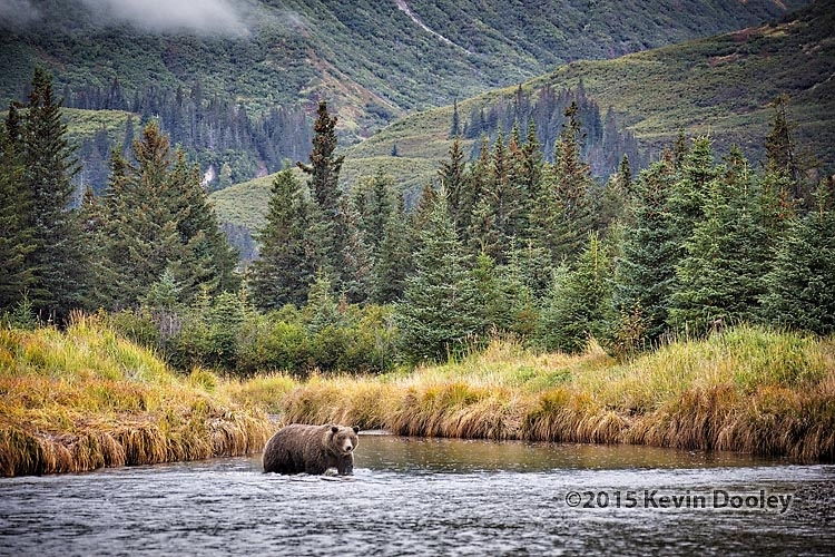 Brown Bear Photography Workshop