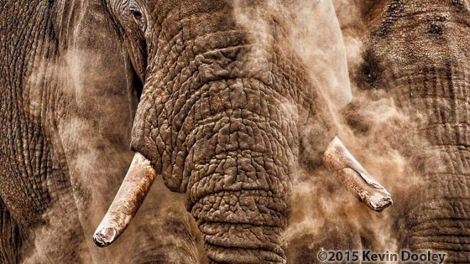 African Safaris March and April 2016